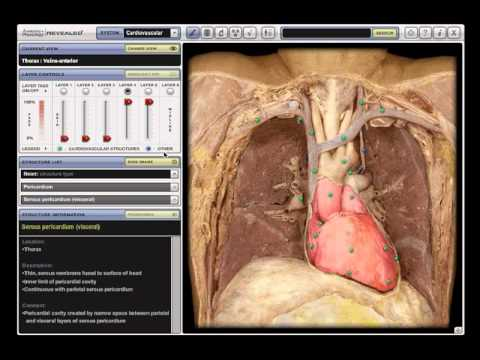 anatomy and physiology revealed - YouTube
