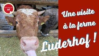 La visite de la ferme avec Viande Suisse