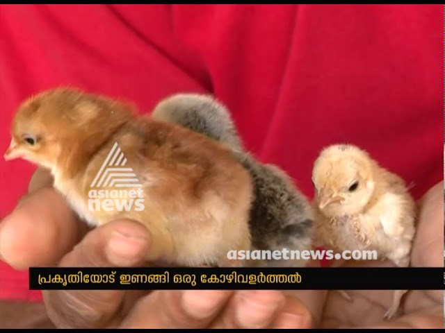 Gireesh's poultry farm in Thodupuzha
