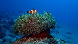 Love Scuba Diving   Inspiration