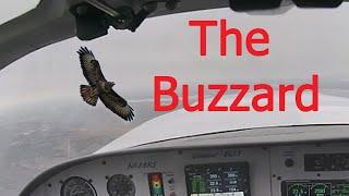 Glasair - Near Miss In Flight Bird Strike, The Buzzard