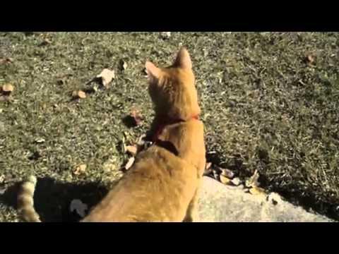 Beat Happening - Catwalk