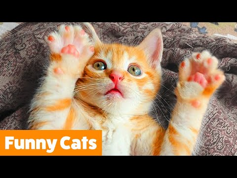 Silly Cat Reactions & Bloopers | Funny Pet Videos