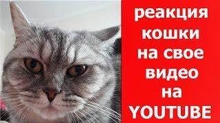 Реакция кошки на свое видео на YouTube