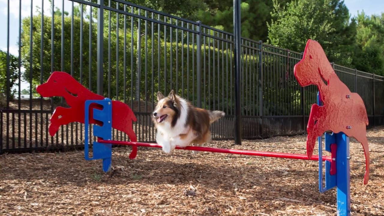 dog agility park near me