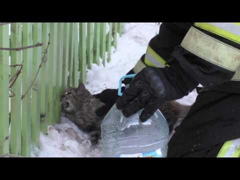 Орловские пожарные реанимировали надышавшегося дымом кота