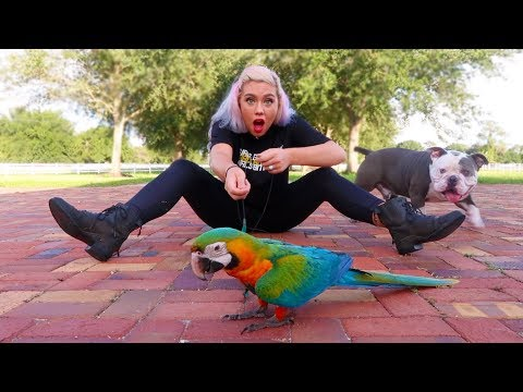 I LET MY PARROT WALK ME FOR THE DAY | NICOLE SKYES