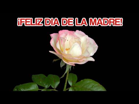 Imagenes y Mensajes Para El Dia De La Madre - Feliz Dia De La Madre