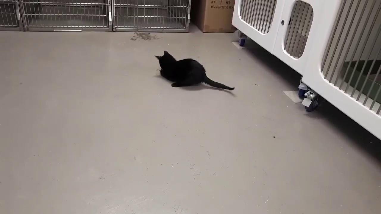 chatte noire tube.com