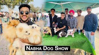 Nabha(Punjab) Dog Show | Pulkit vamp
