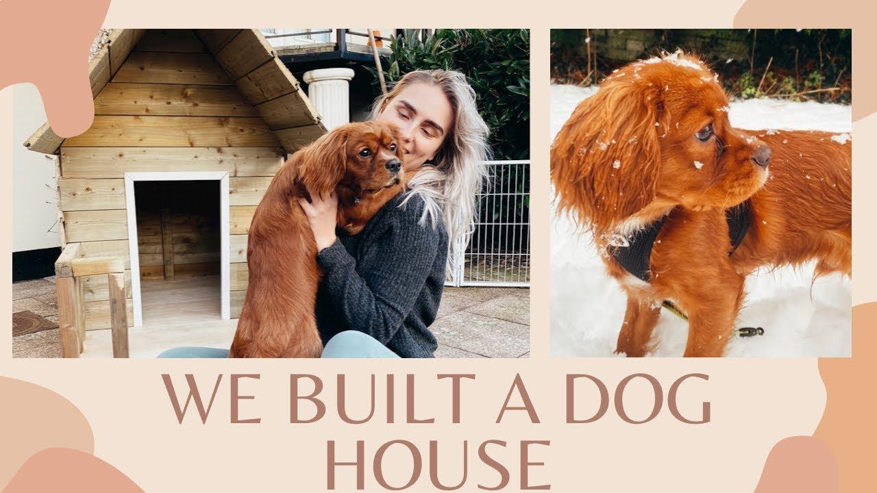 WE BUILT A DOG HOUSE
