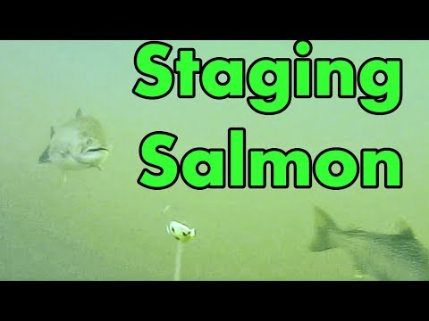 Casting And Trolling For Staging Kings