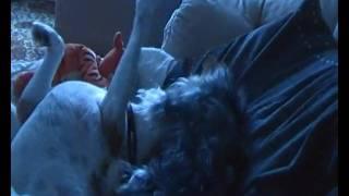 Jack Russell Vs Yorkie Yorkshire Terrier