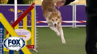 Doogie the Border Collie's spectacular run clinches the 24inch class | FOX SPORTS