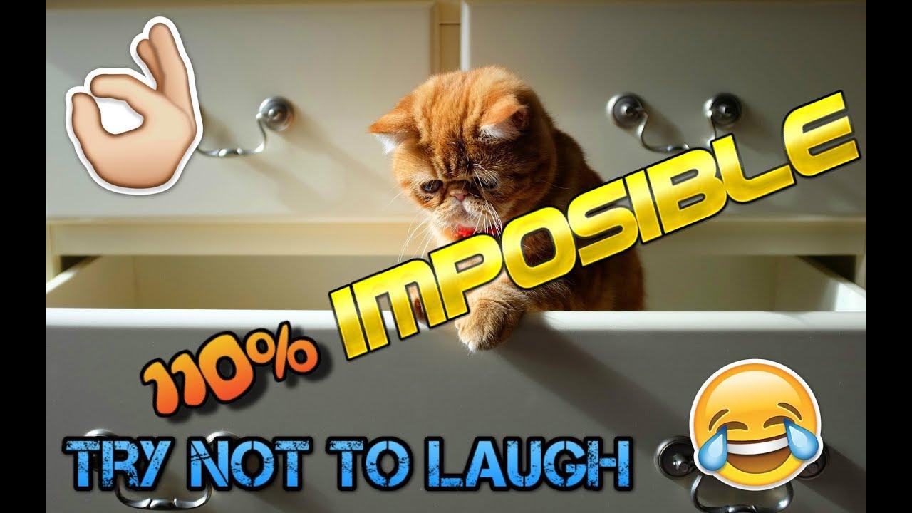 Si te ríes pierdes nivel 110% IMPOSIBLE