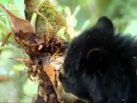 Rainforest animals and plant life in the Amazon jungle BBC ...