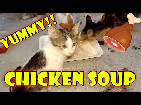 I Gave Chicken Soup to Cats And Kittens (Cute Kittens- Cute Cats)