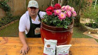 Como Plantar Dália em Vaso para Enfeitar sua Casa e Jardim