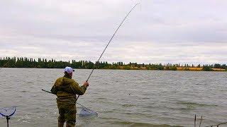 Очуметь! Сазаны на реке не дают ловить леща! Осенняя рыбалка на классический фидер!