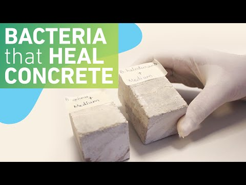 Using bacteria to make self-healing concrete