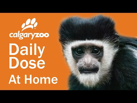 Your Daily Dose At Home: Monkey'ing Around