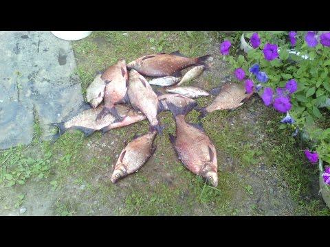 Прогноз клева на неделю в Серпухов, рыбалка в Серпухов, Московская область, Россия