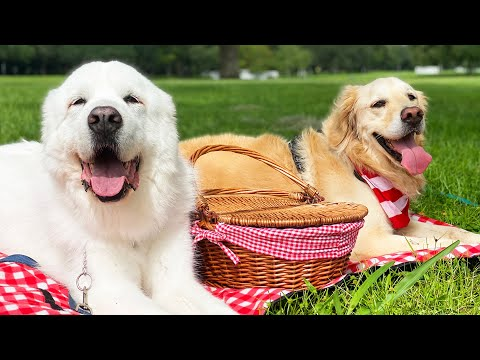 PICNIC IN THE PARK! (Super Cooper Sunday #266)