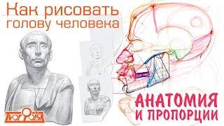 Анатомия и пропорции головы для художников