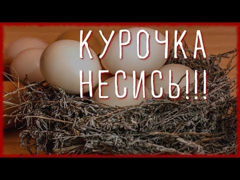 10 СОВЕТОВ ЧТОБЫ КУРЫ неслись ЗИМОЙ КАК ЛЕТОМ. #2. Чем кормить кур чтобы хорошо неслись?