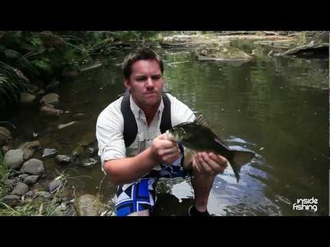 Inside Fishing: Australian Bass on Surface lures