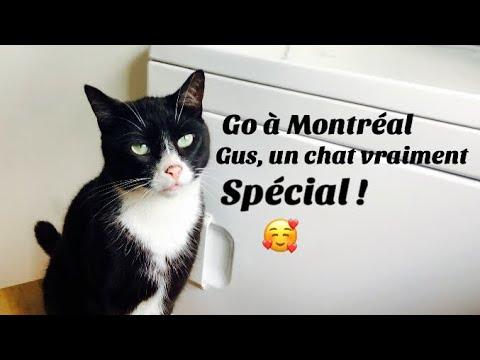 Go à Montréal, un chat vraiment spécial (18 août 19)