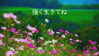 作詞:林愛夏 作曲:杉田未央 ベイビーレイズJAPAN.