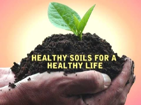 Bswm iys 2015 let 39 s talk about soil the value of soil for 5 facts about soil