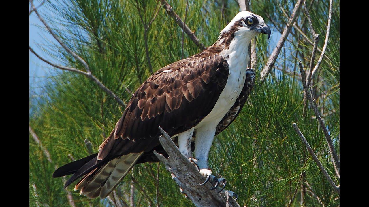 Osprey Island Florida