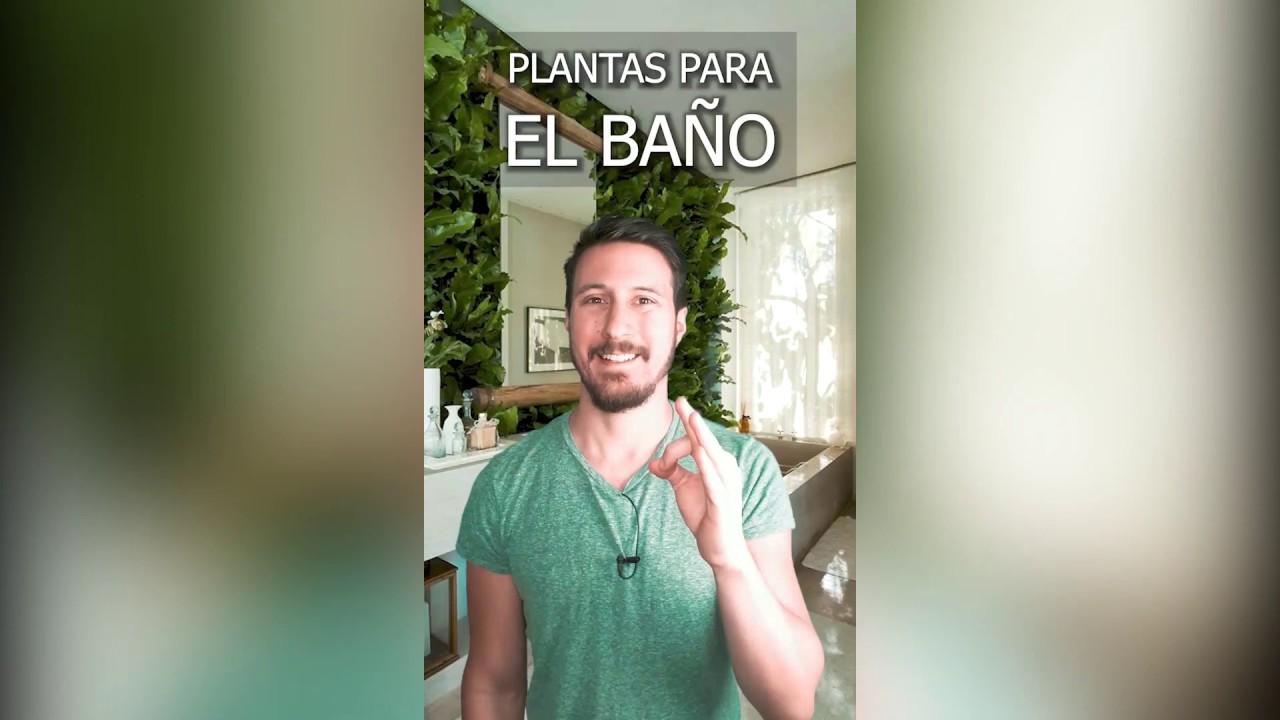 PLANTAS PARA EL BAÑO | Plantas de interior - YouTube