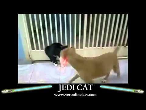 Jedi Cats   La Saga   YouTube