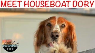Meet Our WELSH Springer Spaniel HOUSEBOAT DOG