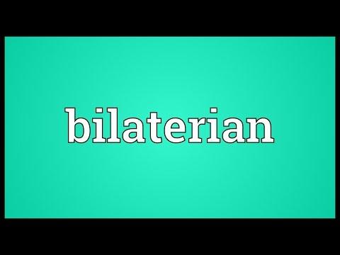 Bilaterian Meaning