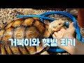 ** 육갑 Youtube Channel in 귀여운 육지거북이와 햇볕 쬐기~ (육갑 유투브) Video on realtimesubscriber.com