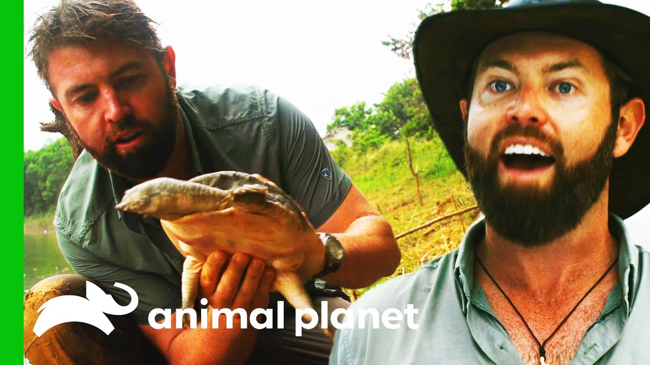 Solid Evidence That This Giant Softshell Turtle ISN'T Extinct! | Extinct or Alive?