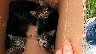 ЧТО СТАЛО С КОТЯТАМИ КОТОРЫХ НАШЛИ У ПРУДА ЧАСТЬ 2 Rescue kittens СПАСЛИ КОТЕНКА