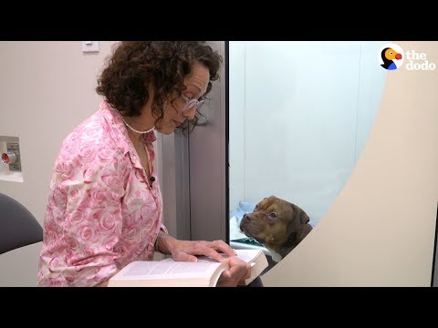 Bebe Neuwirth Reads To Shelter Dogs | The Dodo