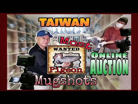 Taiwan Online Auction / Most Wanted Racing Pigeons