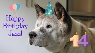 Akita's 14th Birthday
