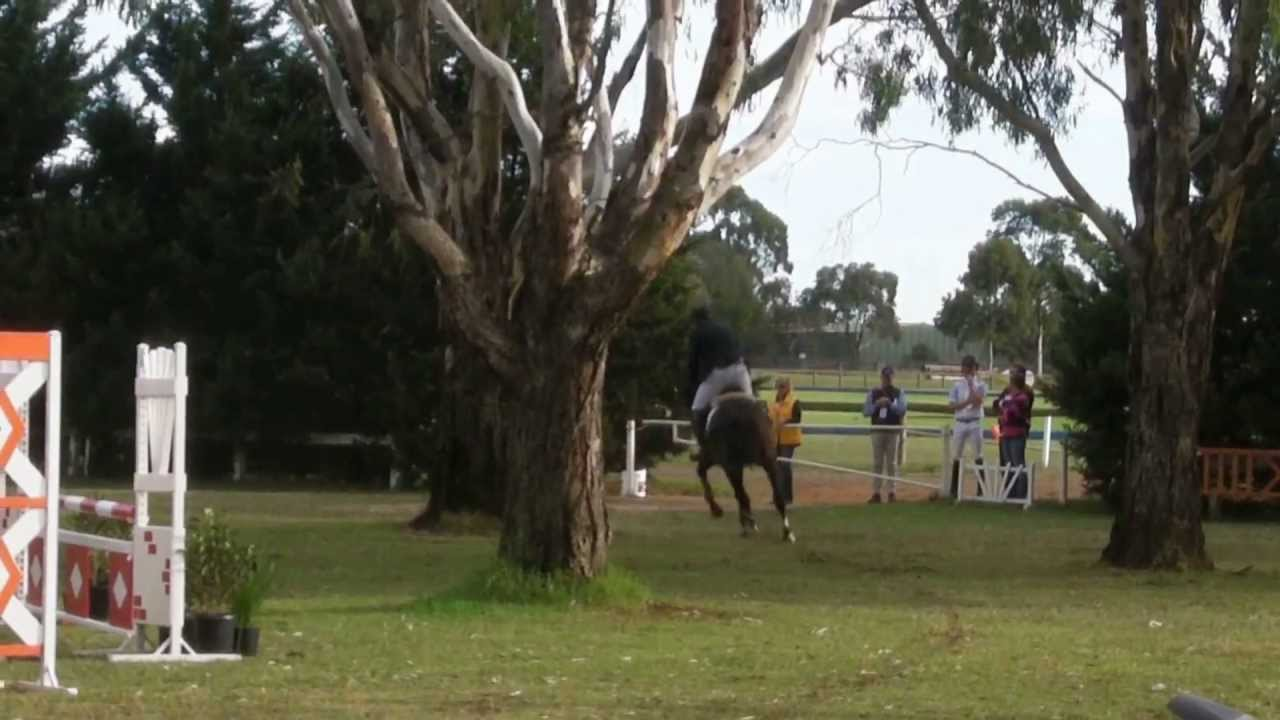 Calgary GNZ Runner Up 4 yr old Champion Jumping with the Stars 2013 Werribee