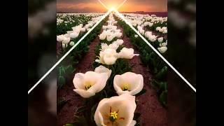 Tuhan Ampuni Aku -  Religi Song  By Fajar Zifes