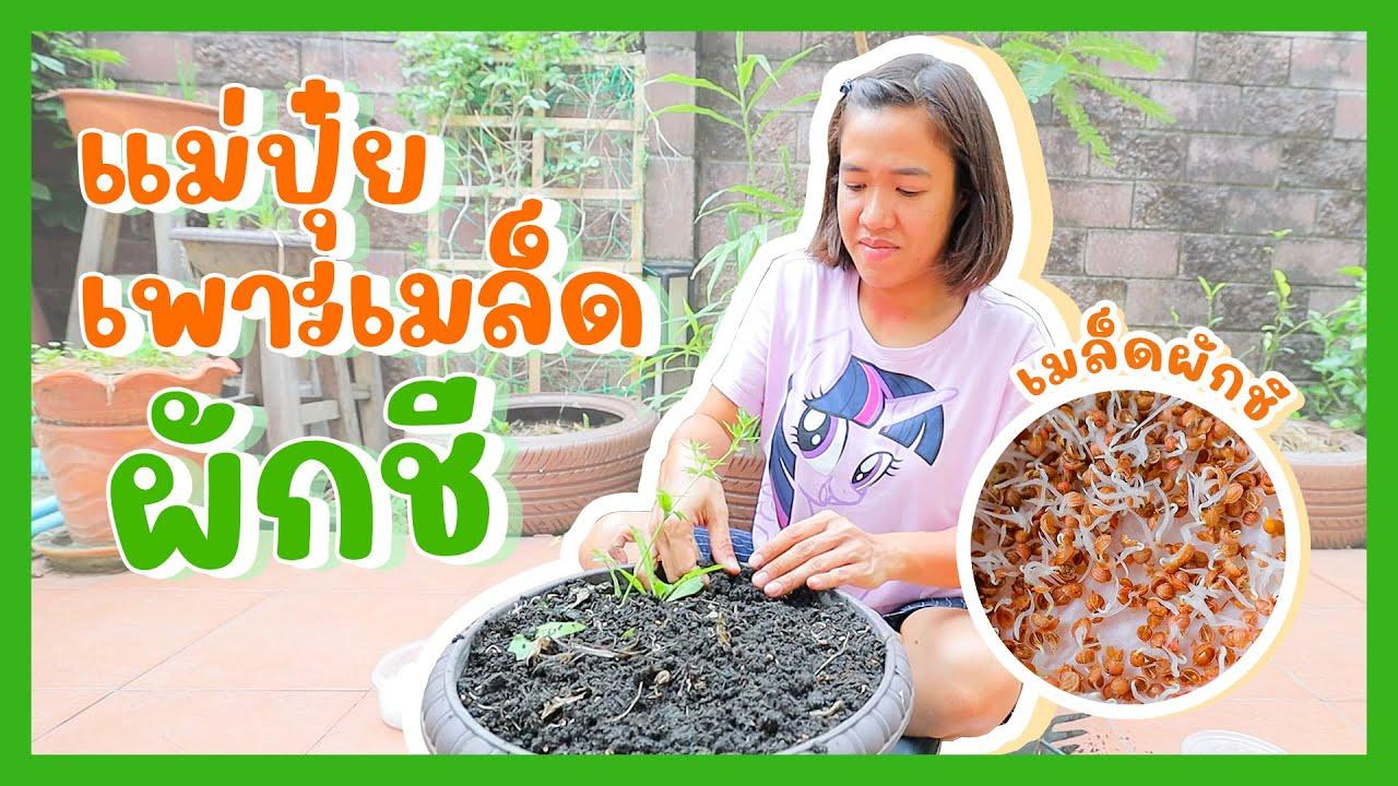 YimYam Family | เพาะต้นผักชี