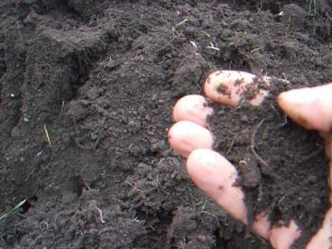 Вопрос: Сколько раз в году перекапывать огород, чтобы земля была плодородная?