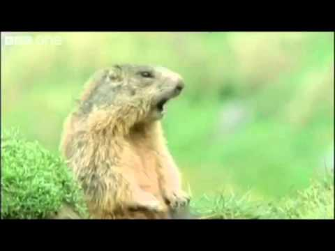 BBC Talking Animals - Steve Allen