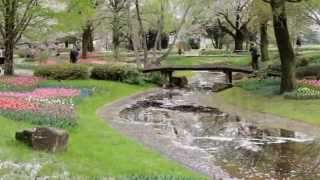 オランダのキューヘンホフには行けないので昭和記念公園で我慢します。...